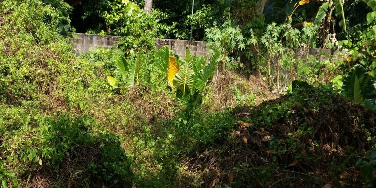 Pretty-Plantation-Land-for-Tourist-Operation-2