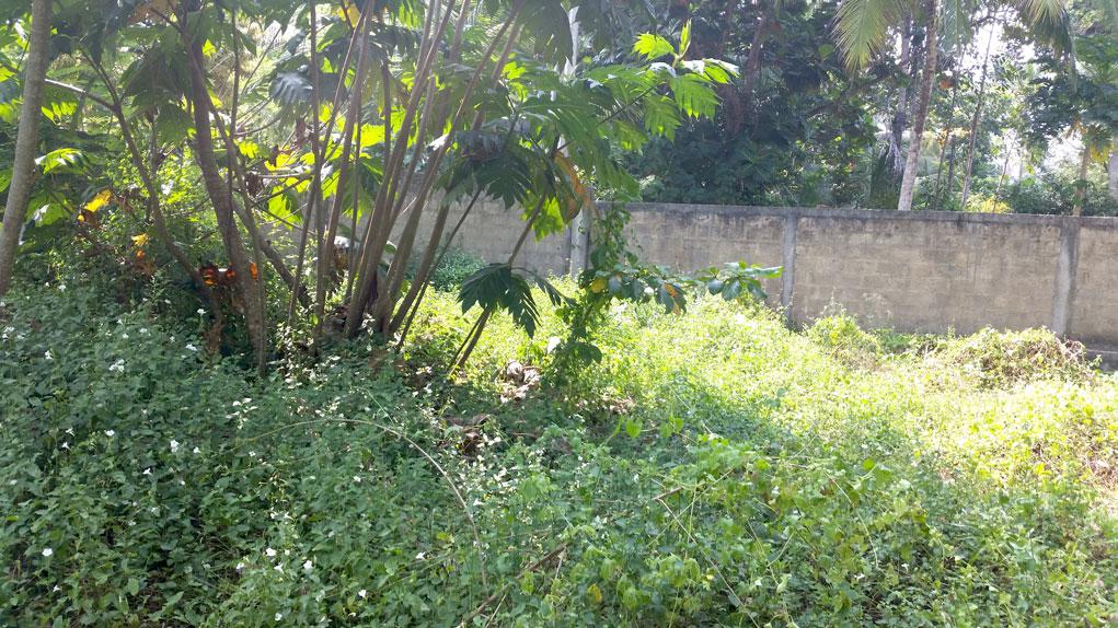 Pretty Plantation Land for Tourist Operation