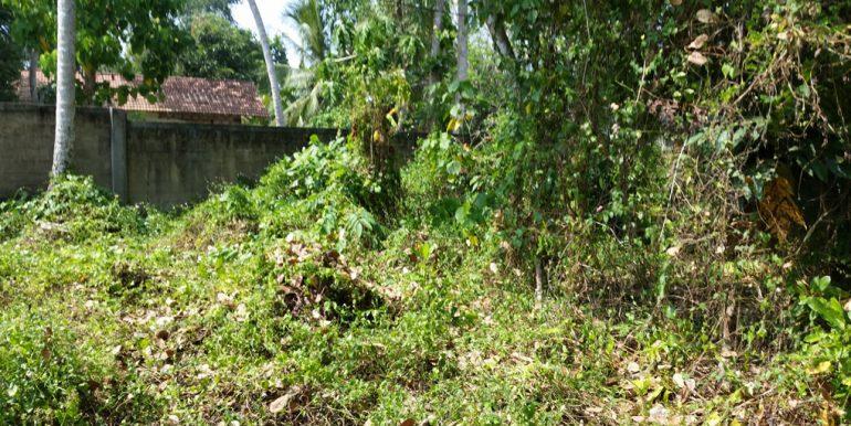 Pretty-Plantation-Land-for-Tourist-Operation-4