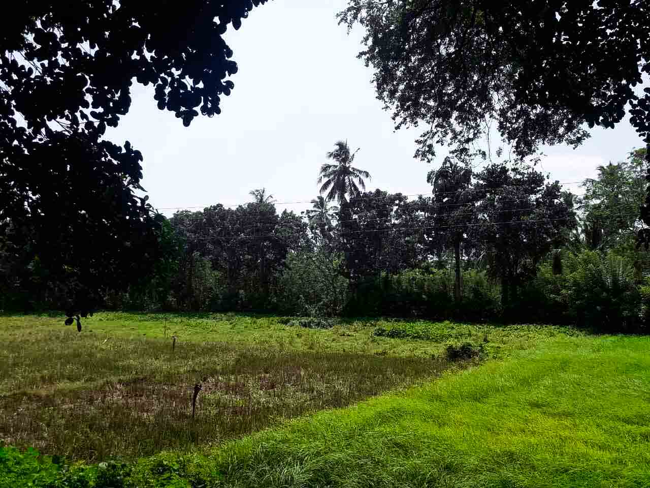 Generous Plot with Paddy Views