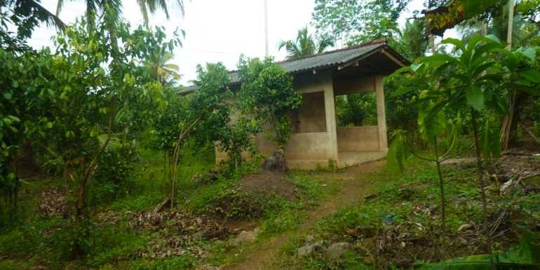 Huge Cheap Cinnamon Plantation in Great Location (1 of 11)