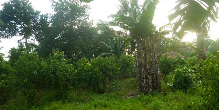 Huge Cheap Cinnamon Plantation in Great Location (10 of 11)