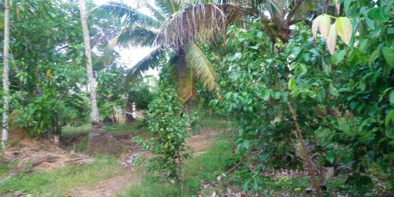 Huge Cheap Cinnamon Plantation in Great Location (11 of 11)