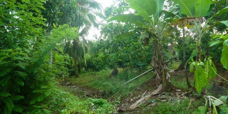 Huge Cheap Cinnamon Plantation in Great Location (2 of 11)