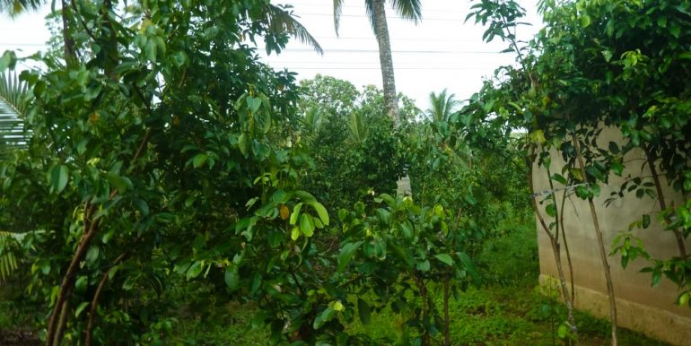 Huge Cheap Cinnamon Plantation in Great Location (3 of 11)