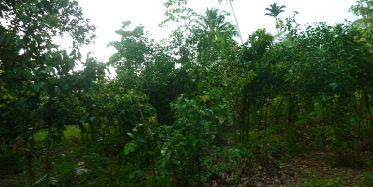 Huge Cheap Cinnamon Plantation in Great Location (4 of 11)