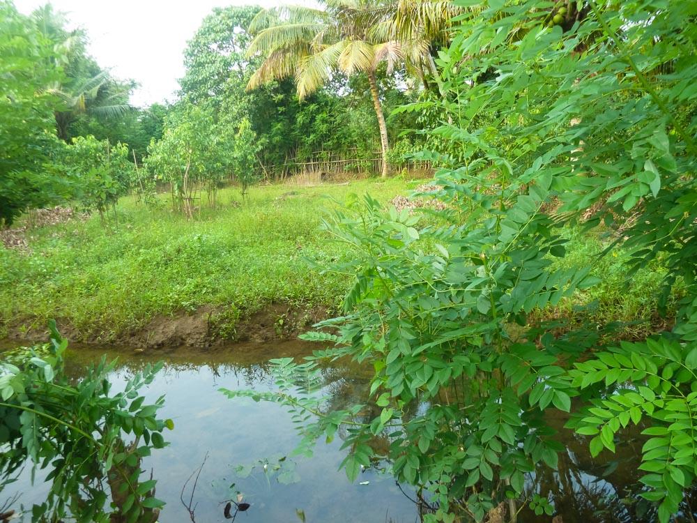 Huge Cheap Cinnamon Plantation in Great Location