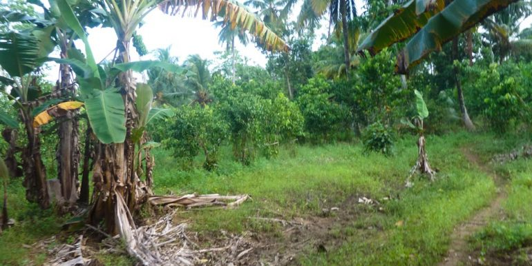 Huge Cheap Cinnamon Plantation in Great Location (9 of 11)