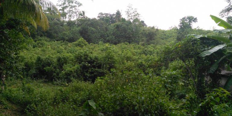 Large Plantation Close to Tourism Area (1 of 5)