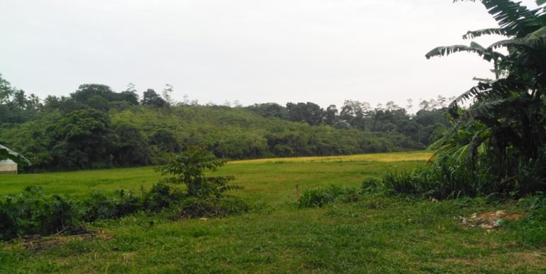 Large Plantation Close to Tourism Area (2 of 5)