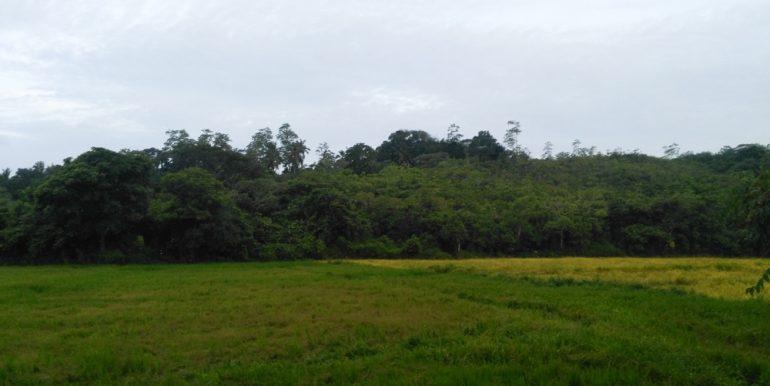 Large Plantation Close to Tourism Area (3 of 5)
