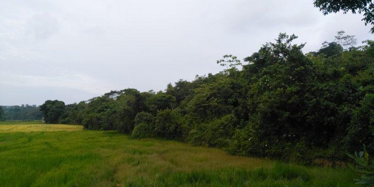 Large Plantation Close to Tourism Area (5 of 5)