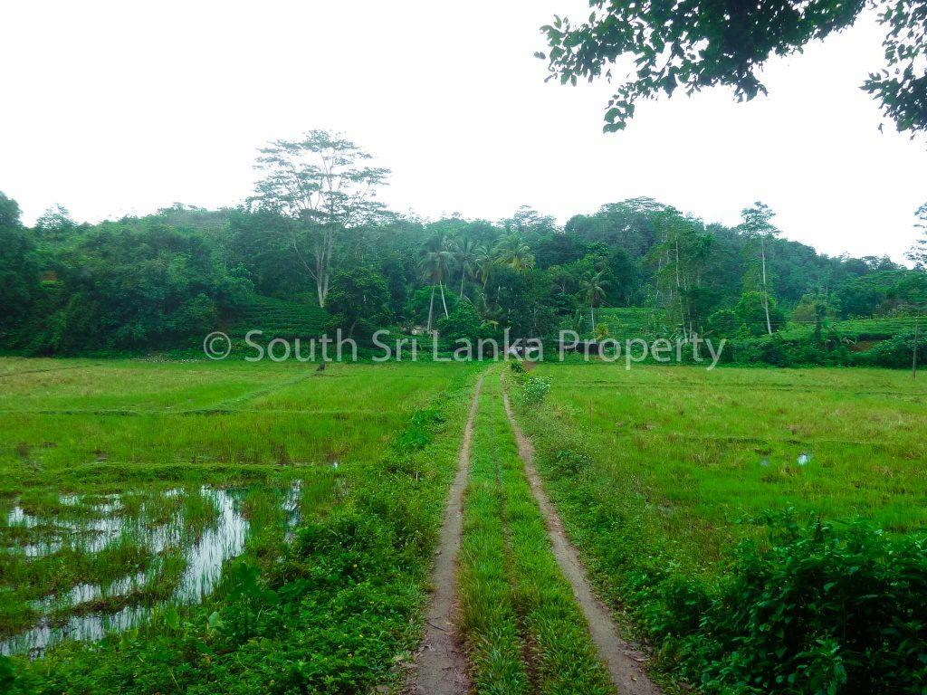 Large Tea Plantation in Beautiful Surroundings