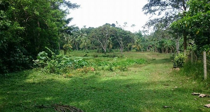 Generous Plot in Excellent Location – Great Value for Money -2