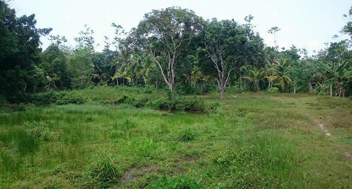 Generous Plot in Excellent Location – Great Value for Money-3