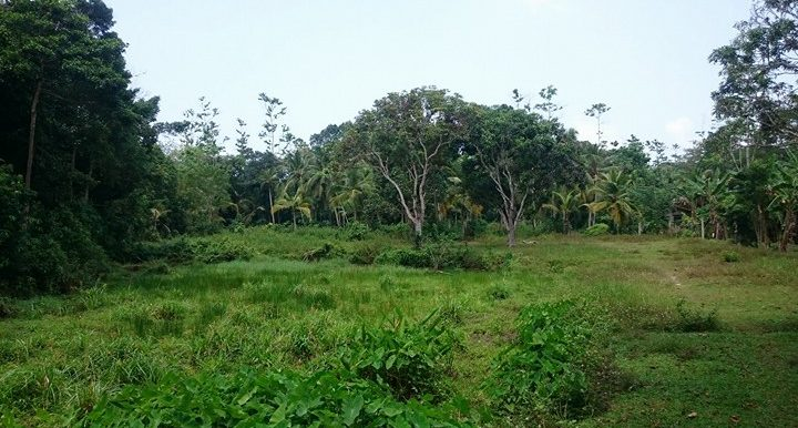 Generous Plot in Excellent Location – Great Value for Money-6