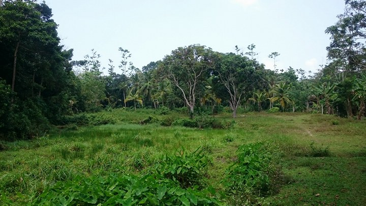 Generous Plot in Excellent Location – Great Value for Money