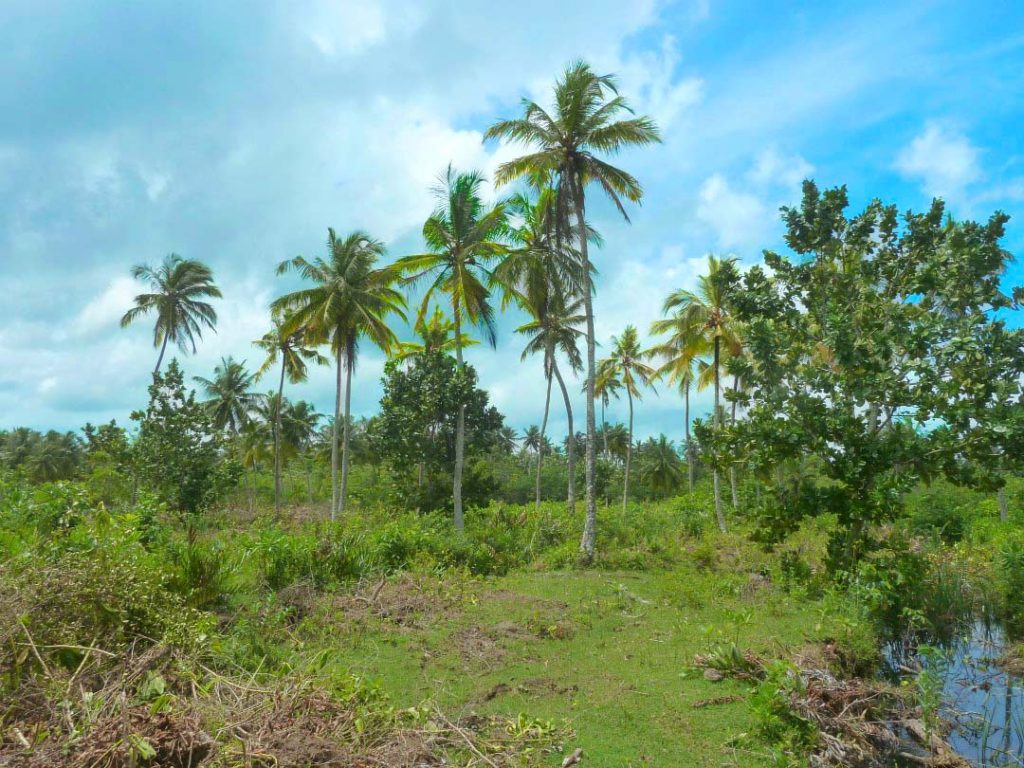 "Attractive ""Coconut Plantation Island"" in Super Location"