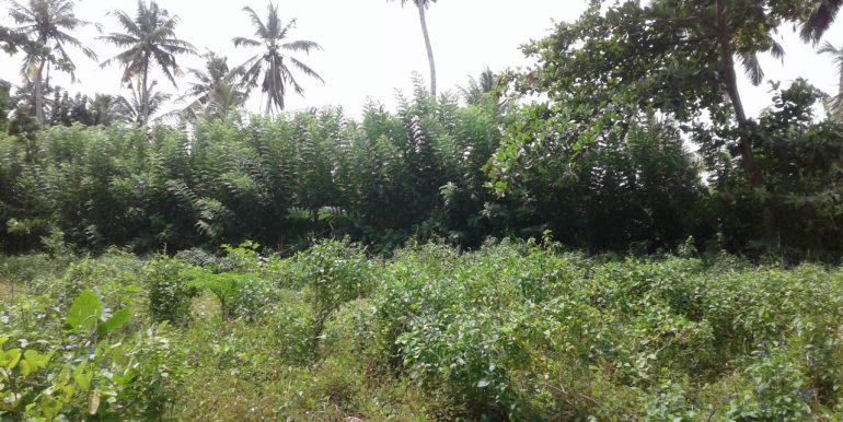 Excellent Plot in Popular Mirissa Close to Beach-3