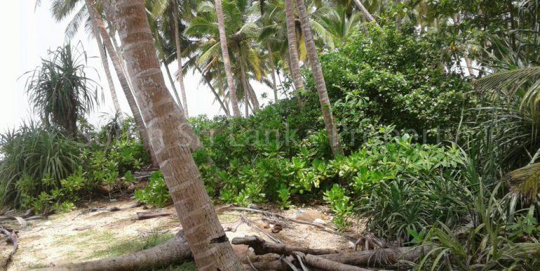 Premium Beach Land (10 of 11)