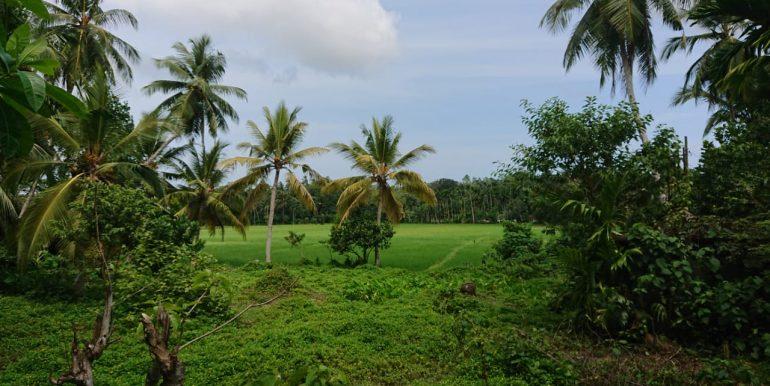 Stunning Paddy View Land -3
