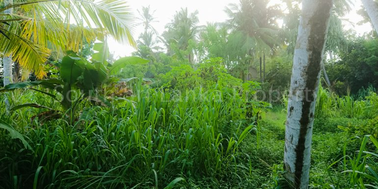 Perfect Beach Plot in Popular Welligama (1 of 5)