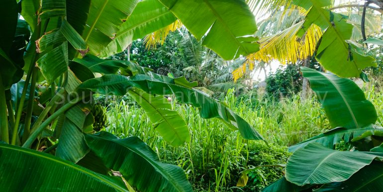 Perfect Beach Plot in Popular Welligama (2 of 5)