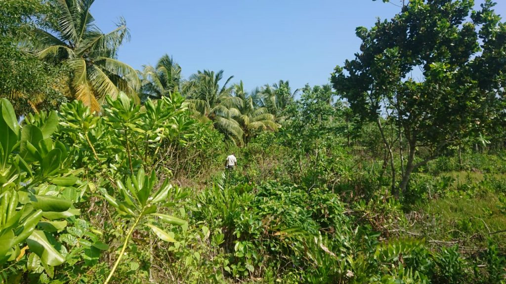 Cheap Plots in Popular Ahangama Close to the Beach