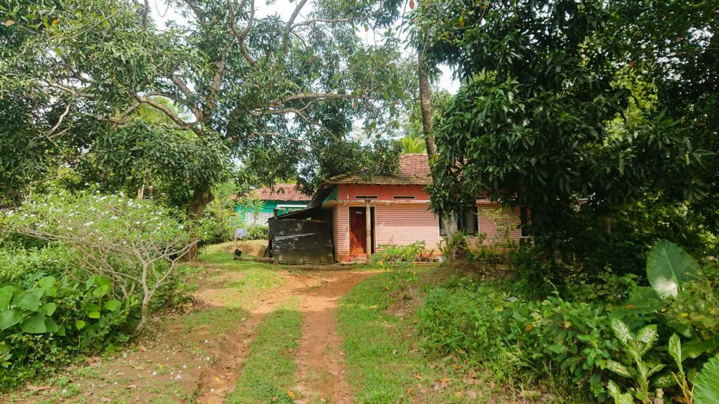 Cheap local house with paddy views