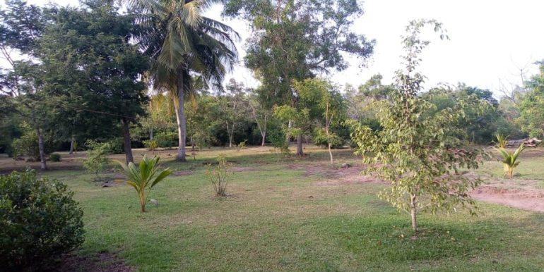 d's lagoon house - land